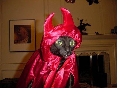 animales-graciosos-gato-75
