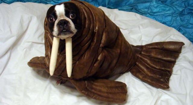 disfraz-de-morsa-perro