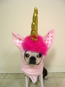 perro-disfrazado-unicornio